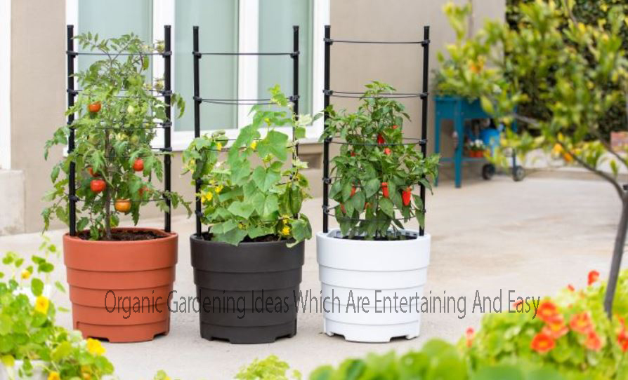 Organic Gardening Ideas Which Are Entertaining And Easy