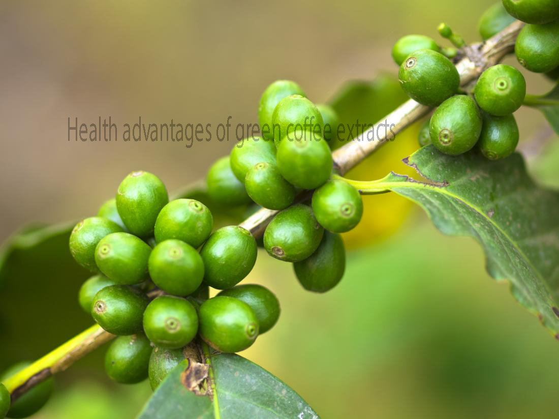 Health advantages of green coffee extracts